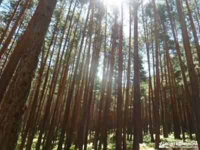 Pesquerías Reales-Valsaín,Río Eresma;viajar semana santa bosque de irati rutas camino de santiago